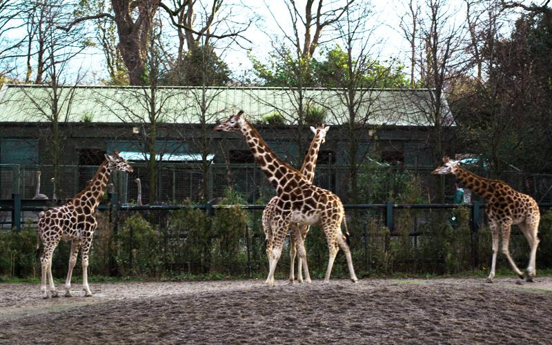 zoo-dublin-08